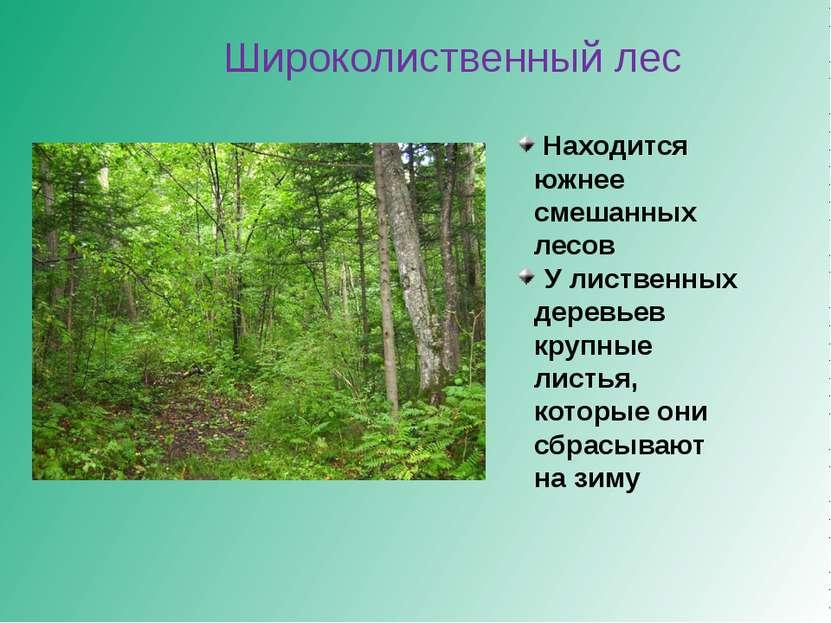 Широколиственный лес Находится южнее смешанных лесов У лиственных деревьев кр...
