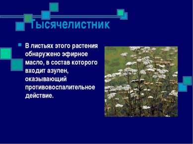Тысячелистник В листьях этого растения обнаружено эфирное масло, в состав кот...