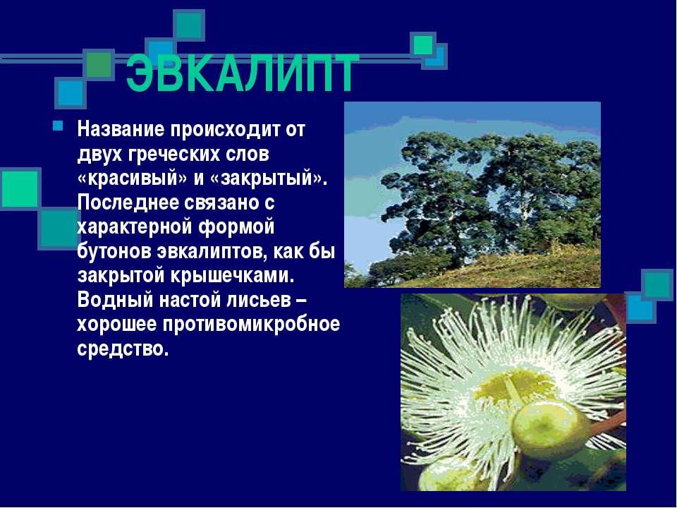 ЭВКАЛИПТ Название происходит от двух греческих слов «красивый» и «закрытый». ...