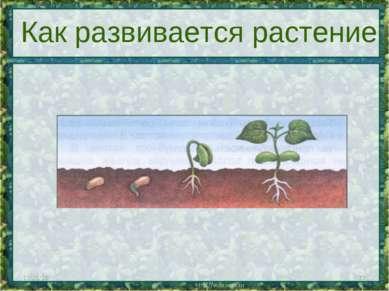 * * Как развивается растение