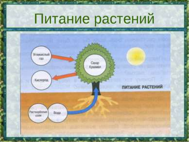 * * Питание растений