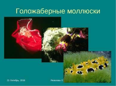* Яковлева Л.А. * Голожаберные моллюски Яковлева Л.А.