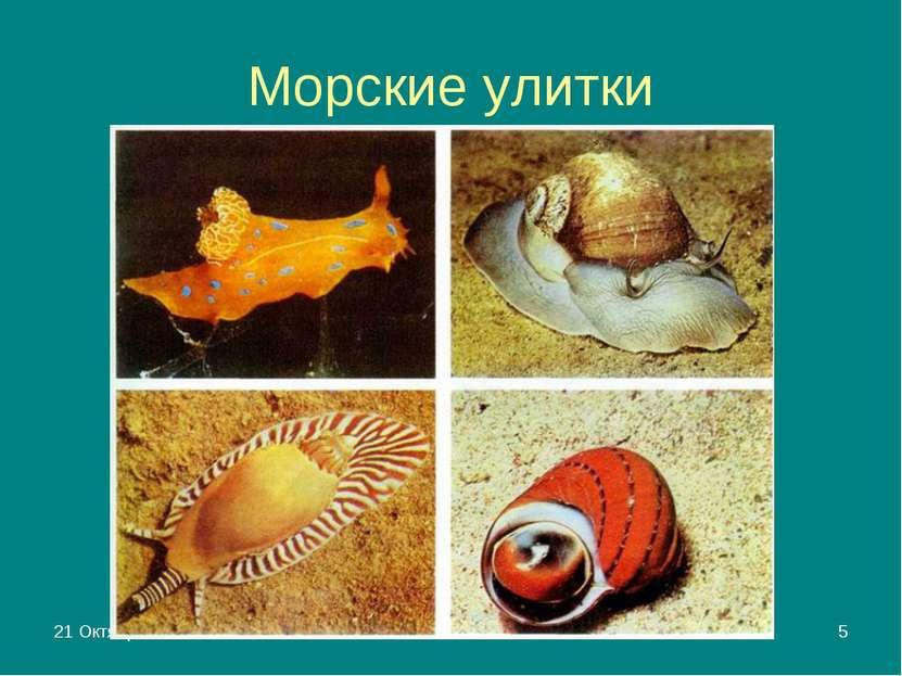 * Яковлева Л.А. * Морские улитки Яковлева Л.А.