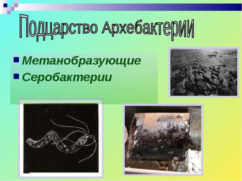Метанобразующие Серобактерии