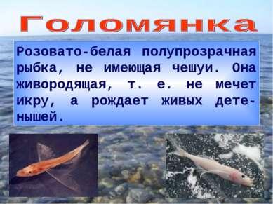 Розовато-белая полупрозрачная рыбка, не имеющая чешуи. Она живородящая, т. е....