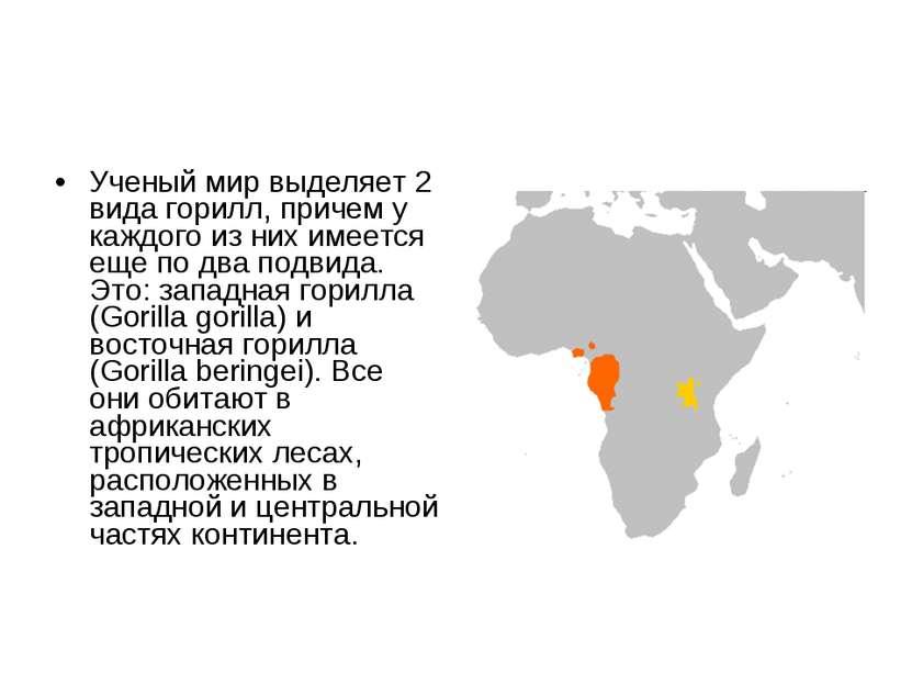Ученый мир выделяет 2 вида горилл, причем у каждого из них имеется еще по два...