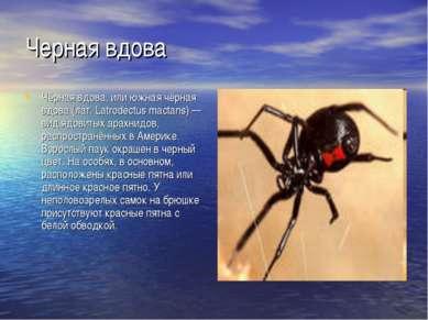 Черная вдова Чёрная вдова, или южная чёрная вдова (лат. Latrodectus mactans) ...