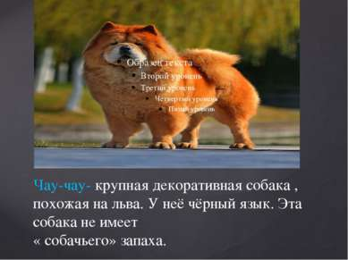 Чау-чау- крупная декоративная собака , похожая на льва. У неё чёрный язык. Эт...
