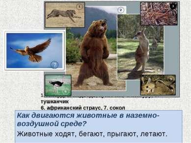 1. гепард, 2. медведь, кузнечик, 4. кенгуру, 5. тушканчик 6. африканский стра...