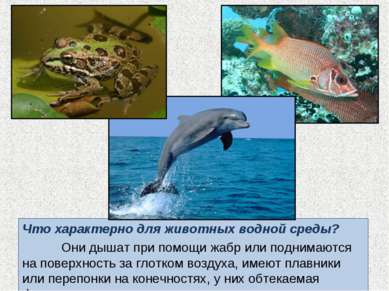 Что характерно для животных водной среды? Они дышат при помощи жабр или подни...