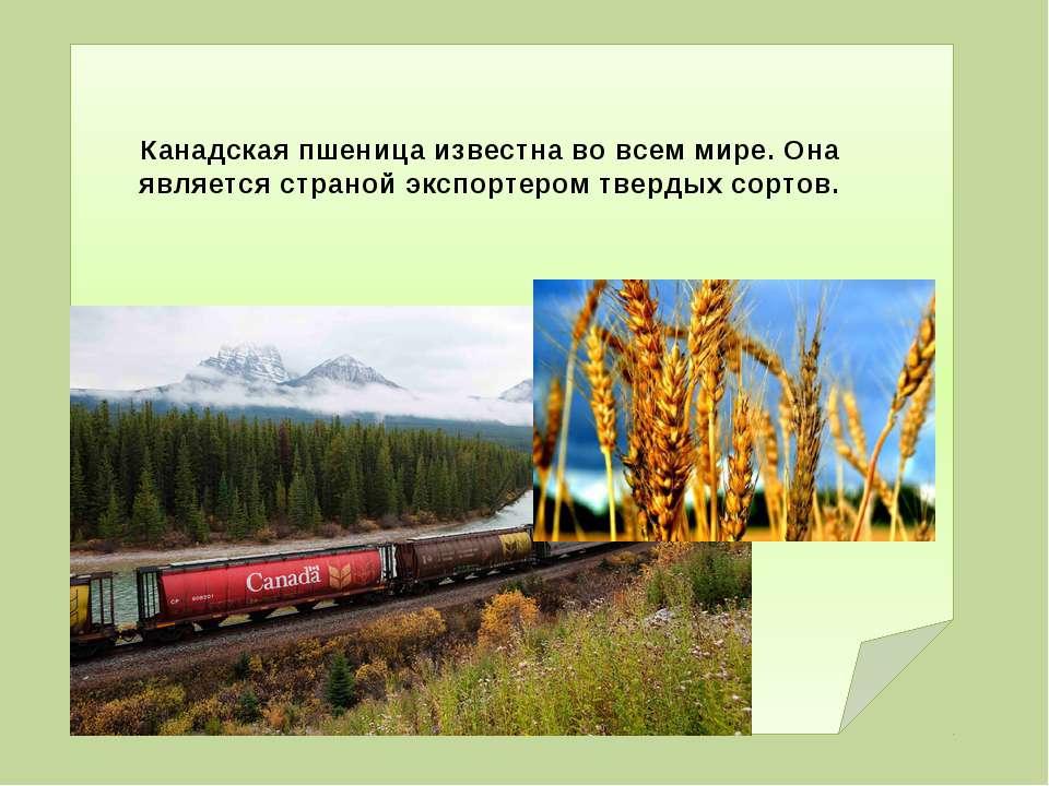 Канадская пшеница известна во всем мире. Она является страной экспортером тве...