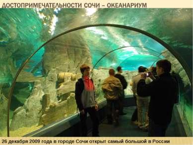 26 декабря 2009 года в городе Сочи открыт самый большой в России океанариум