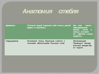 Анатомия стебля Древесина. Плотный самый широкий слой. Клетки разной формы и ...