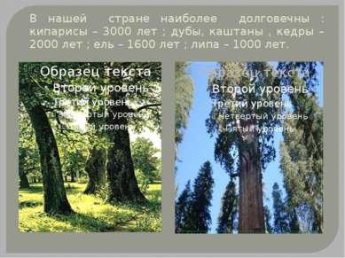 В нашей стране наиболее долговечны : кипарисы – 3000 лет ; дубы, каштаны , ке...