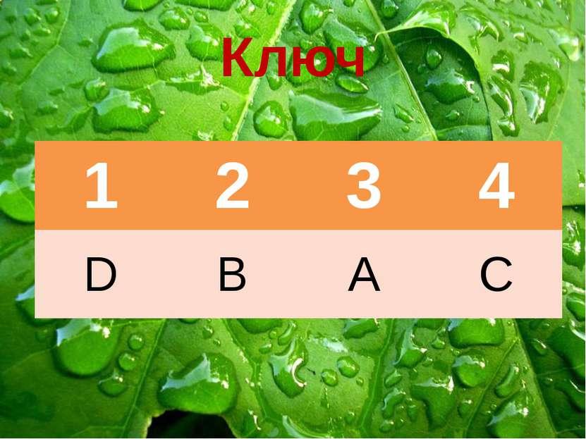 Ключ 1 2 3 4 D B A C
