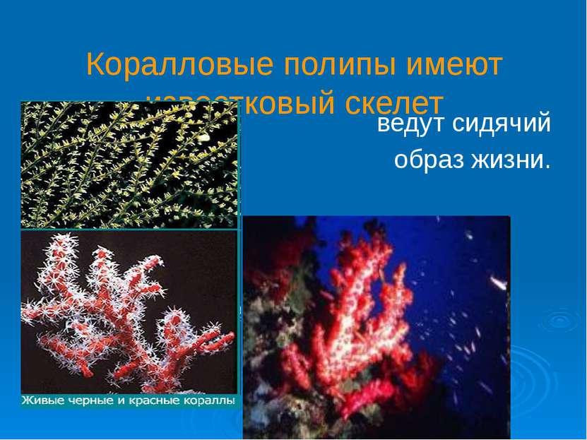 Коралловые полипы имеют известковый скелет ведут сидячий образ жизни.