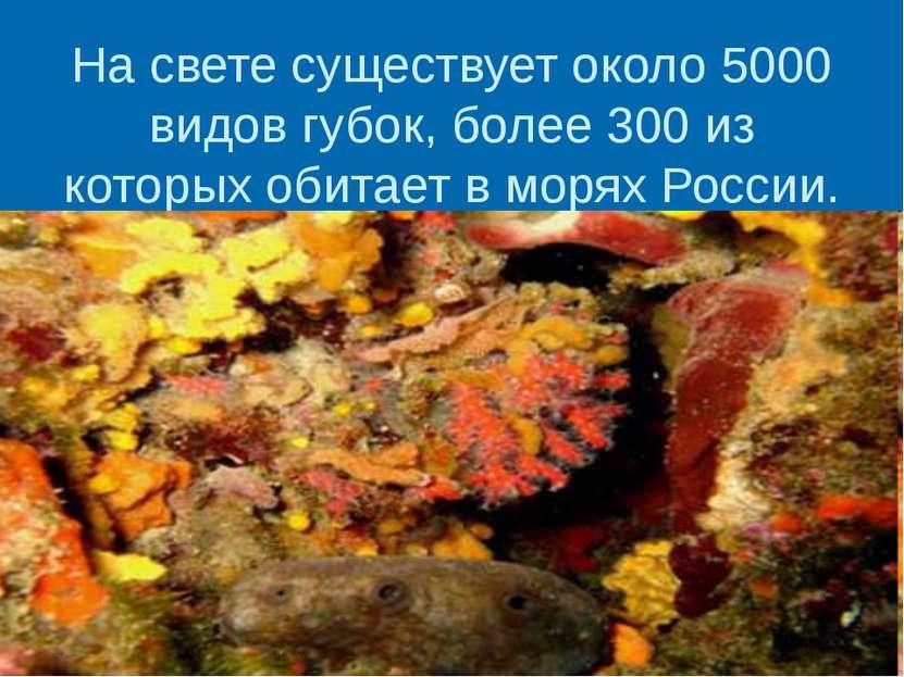 На свете существует около 5000 видов губок, более 300 из которых обитает в мо...