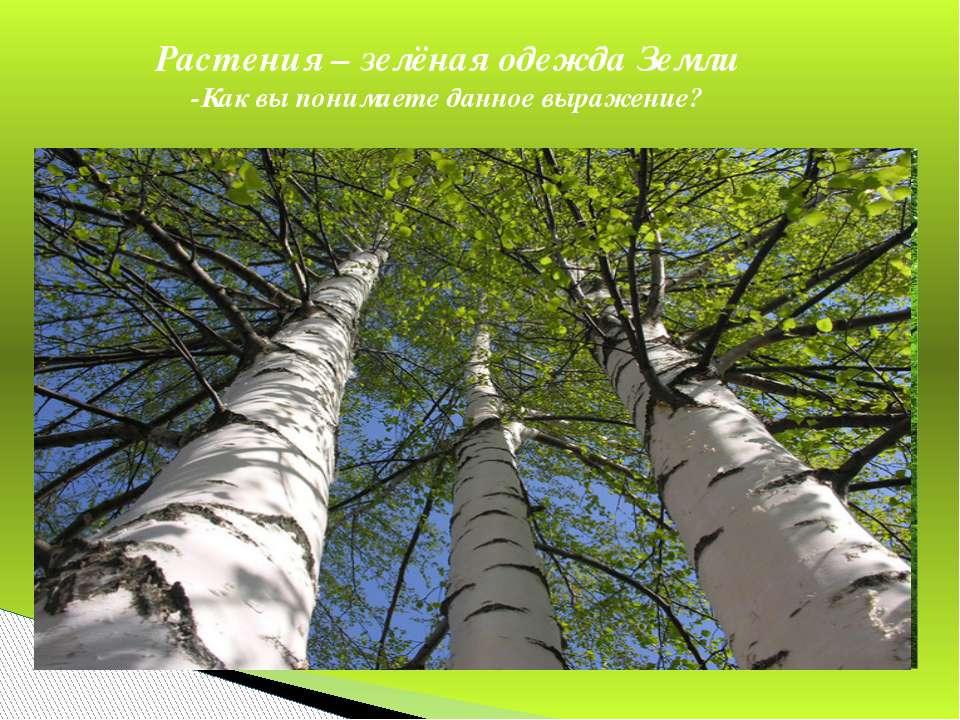 Растения – зелёная одежда Земли -Как вы понимаете данное выражение?
