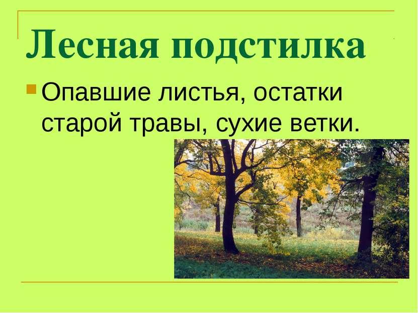 Лесная подстилка Опавшие листья, остатки старой травы, сухие ветки.