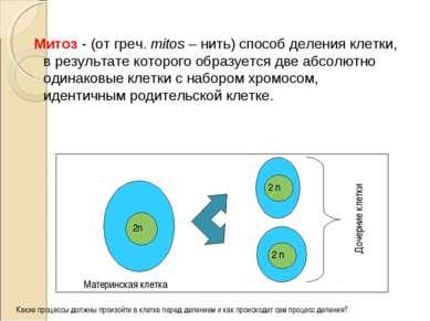 Митоз - (от греч. mitos – нить) способ деления клетки, в результате которого ...