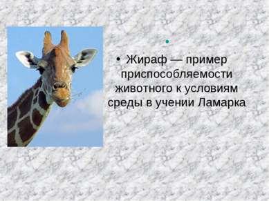 Жираф— пример приспособляемости животного к условиям среды в учении Ламарка