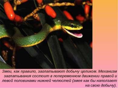 Змеи, как правило, заглатывают добычу целиком. Механизм заглатывания состоит ...