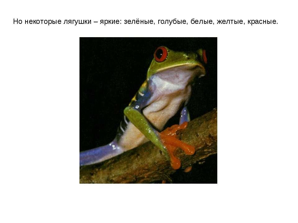Но некоторые лягушки – яркие: зелёные, голубые, белые, желтые, красные.