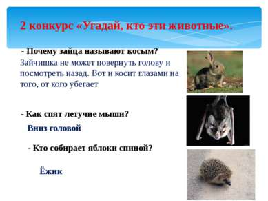 2 конкурс «Угадай, кто эти животные». - Почему зайца называют косым? Зайчишка...