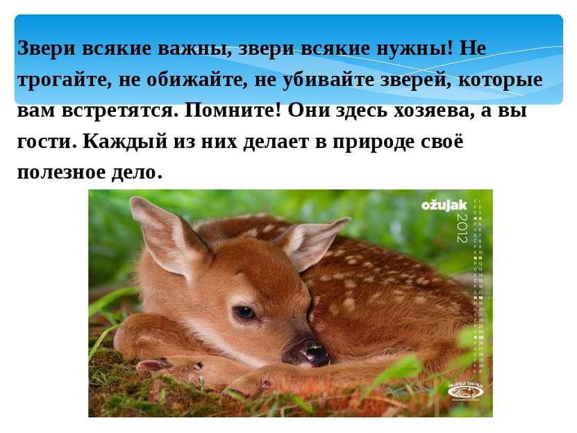 Звери всякие важны, звери всякие нужны! Не трогайте, не обижайте, не убивайте...