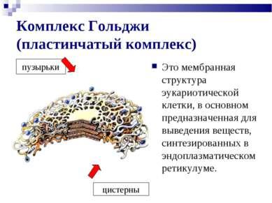 Комплекс Гольджи (пластинчатый комплекс) Это мембранная структура эукариотиче...