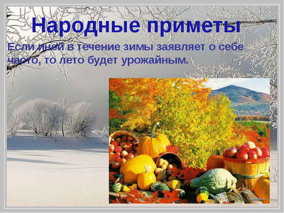 Если иней в течение зимы заявляет о себе часто, то лето будет урожайным. Наро...