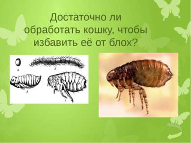 Почему так много комаров во влажных местах?