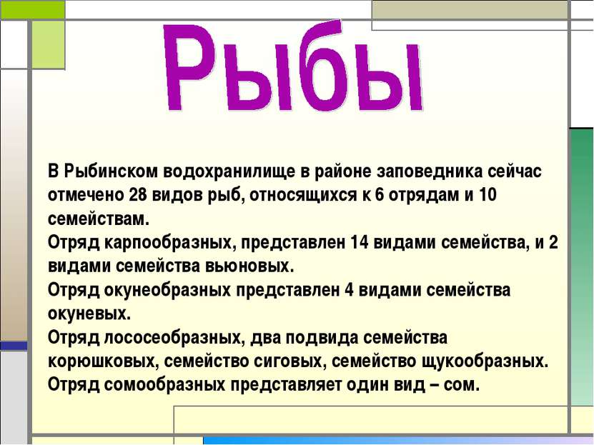 В Рыбинском водохранилище в районе заповедника сейчас отмечено 28 видов рыб, ...
