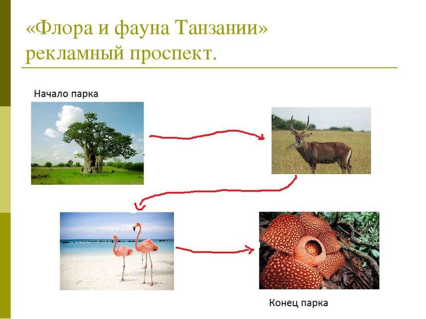 «Флора и фауна Танзании» рекламный проспект.