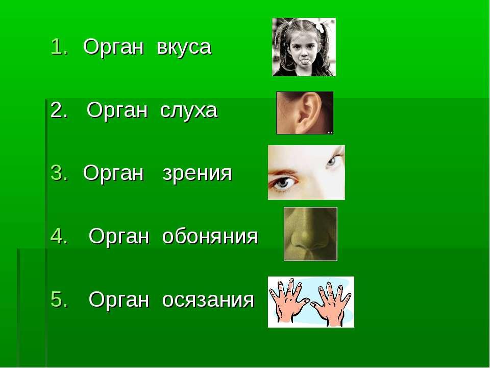Орган вкуса 2. Орган слуха Орган зрения Орган обоняния Орган осязания