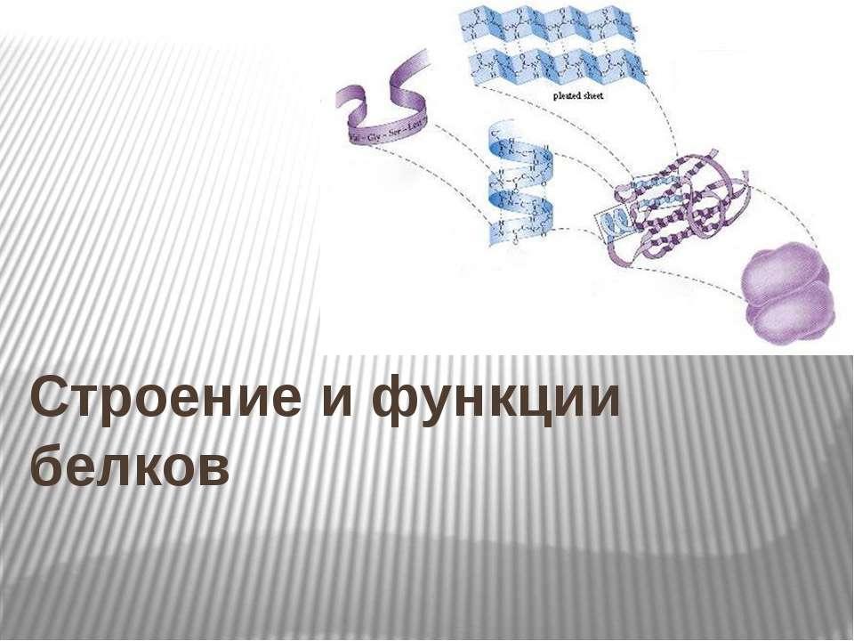 Строение и функции белков