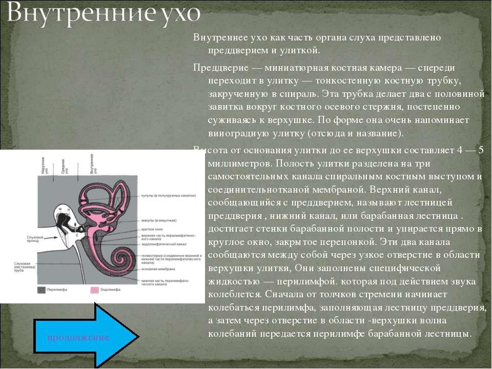Внутреннее ухо как часть органа слуха представлено преддверием и улиткой. Пре...