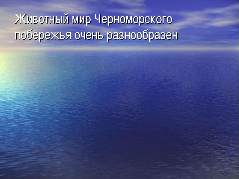 Животный мир Черноморского побережья очень разнообразен