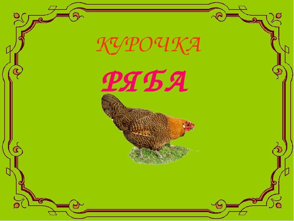 КУРОЧКА РЯБА