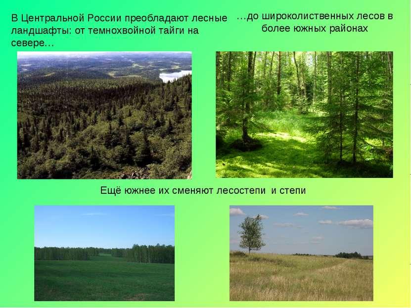В Центральной России преобладают лесные ландшафты: от темнохвойной тайги на с...