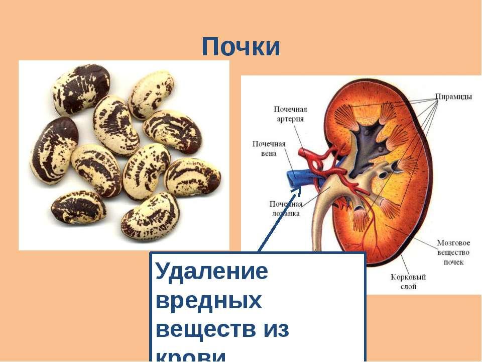 Почки Удаление вредных веществ из крови