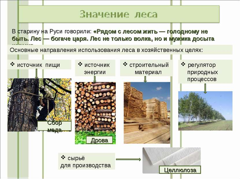 В старину на Руси говорили: «Рядом с лесом жить— голодному не быть. Лес— бо...