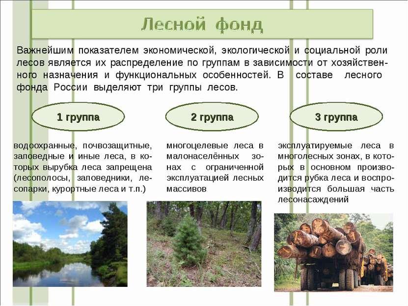 Важнейшим показателем экономической, экологической и социальной роли лесов яв...