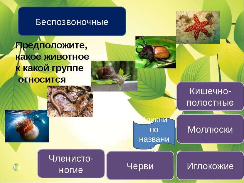 Беспозвоночные Кишечно-полостные Черви Моллюски Членисто-ногие Иглокожие Пред...