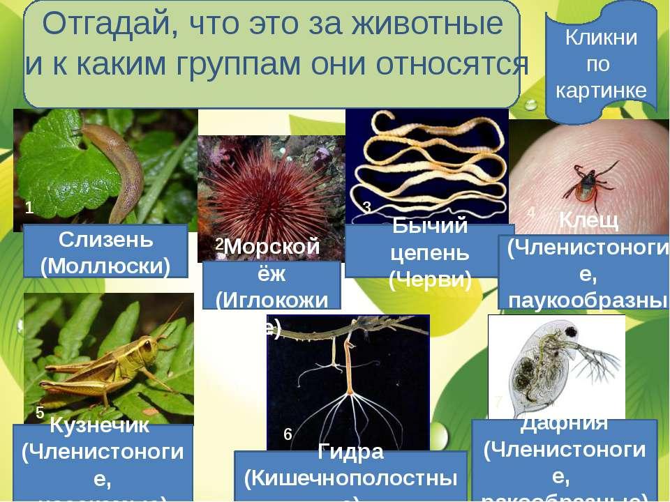 Отгадай, что это за животные и к каким группам они относятся Слизень (Моллюск...