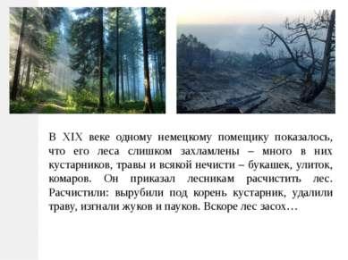 В XIX веке одному немецкому помещику показалось, что его леса слишком захламл...