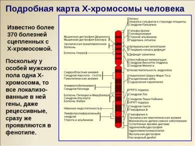 Известно более 370 болезней сцепленных с Х-хромосомой. Поскольку у особей муж...