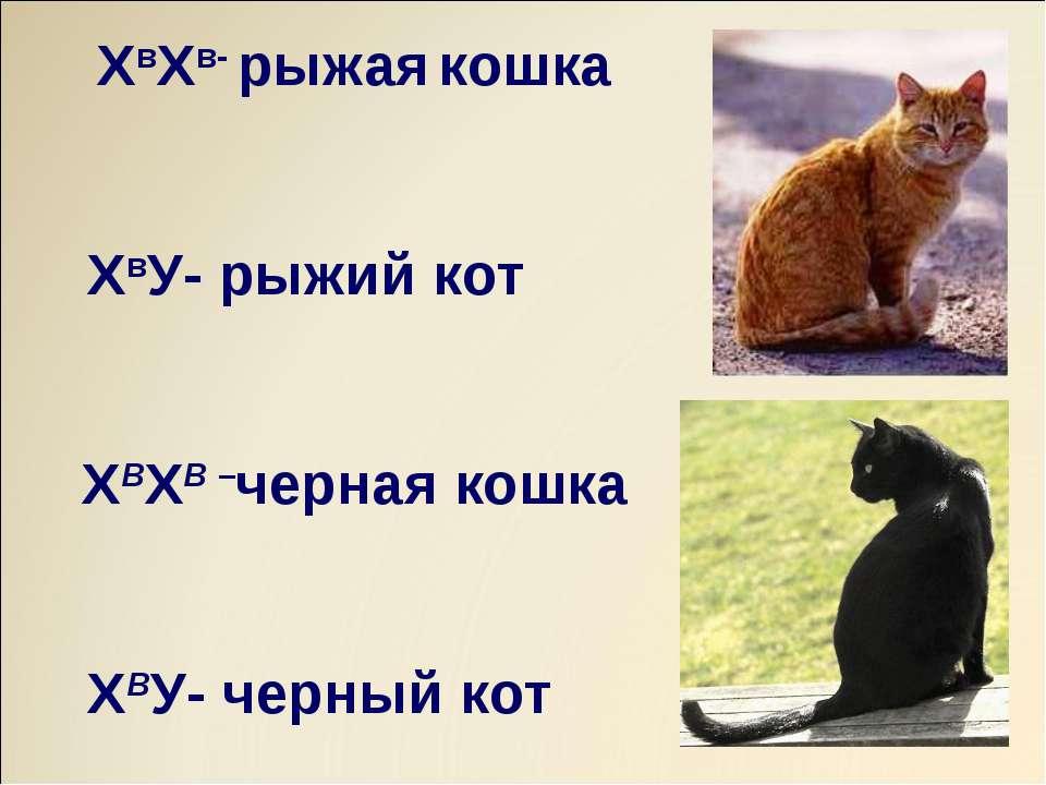ХвХв- рыжая кошка ХвУ- рыжий кот ХВХВ –черная кошка ХВУ- черный кот