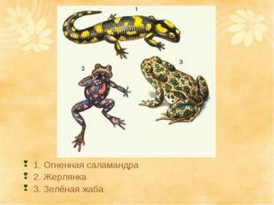 1. Огненная саламандра 2. Жерлянка 3. Зелёная жаба