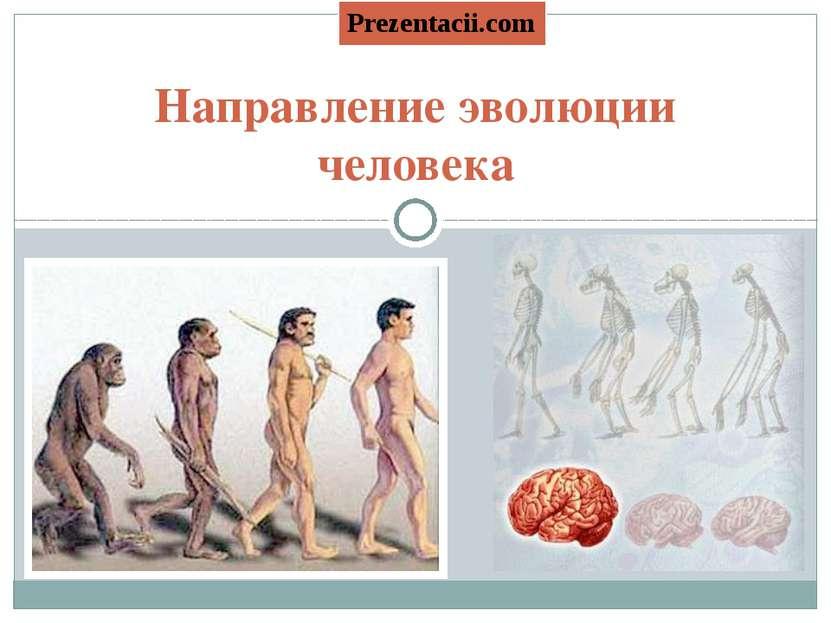 Направление эволюции человека Prezentacii.com